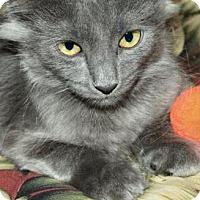 Domestic Mediumhair Kitten for adoption in Waupaca, Wisconsin - Chloe