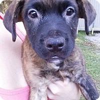 Adopt A Pet :: Lochte - Gainesville, FL