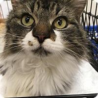 Adopt A Pet :: Maxine - Columbia, SC