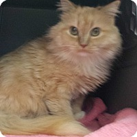 Adopt A Pet :: Inez - Stafford, VA