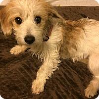 Adopt A Pet :: Sarah - SOUTHINGTON, CT