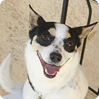 Adopt A Pet :: Bentley - I'm an easy dog! - Bellflower, CA
