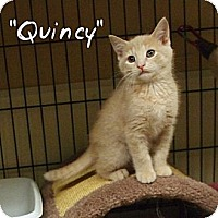 Adopt A Pet :: Quincy - Ocean City, NJ