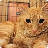 Adopt A Pet :: Garfield - Smyrna, GA