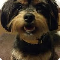 Adopt A Pet :: Dorothy - Broomfield, CO