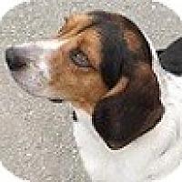 Adopt A Pet :: Ringo - Hamilton, ON