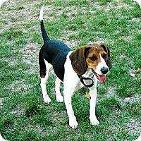 Adopt A Pet :: Skyy - Novi, MI