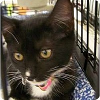 Adopt A Pet :: Rhoda - Riverside, RI
