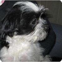 Adopt A Pet :: Ace - Antioch, IL