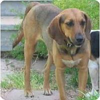 Adopt A Pet :: Chloe Rose - Phoenix, AZ