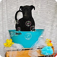 Adopt A Pet :: Spartan - Del Rio, TX