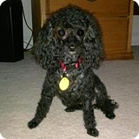Adopt A Pet :: PUFF - Melbourne, FL