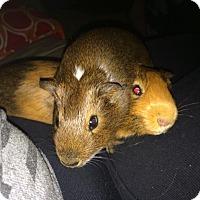 Adopt A Pet :: Edmund and Redford - Fullerton, CA