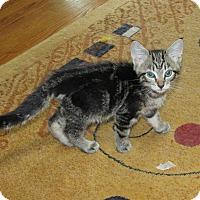 Adopt A Pet :: Carmine - Southington, CT