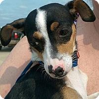 Adopt A Pet :: Pepper - Davenport, IA
