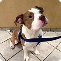 Adopt A Pet :: Troy - Villa Park, IL