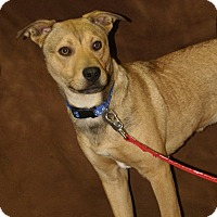 Terrier (Unknown Type, Medium) Mix Dog for adoption in Hawk Point, Missouri - Wyatt