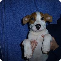 Adopt A Pet :: Skipper - Oviedo, FL