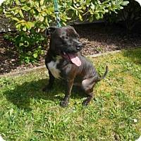 Adopt A Pet :: RUGER - McKinleyville, CA
