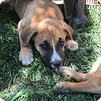 Adopt A Pet :: Buster - Studio City, CA