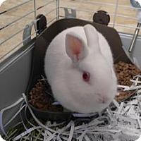 Adopt A Pet :: January - Titusville, FL
