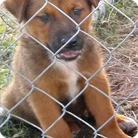 Adopt A Pet :: Bruno - Waller, TX