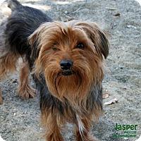 Adopt A Pet :: Jasper - Santa Maria, CA