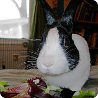 Adopt A Pet :: Bunners - Edinburg, PA