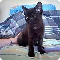 Adopt A Pet :: Gothan - Enid, OK