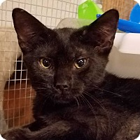 Adopt A Pet :: Audra - Trevose, PA