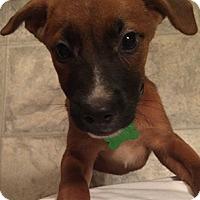 Adopt A Pet :: Daisy - Patterson, NY