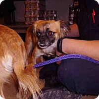 Adopt A Pet :: BEAR - Pueblo, CO