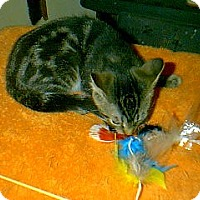 Adopt A Pet :: Bingo - Winchendon, MA