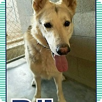 Adopt A Pet :: Riley - Edwards AFB, CA