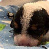 Adopt A Pet :: Magik - Salem, WV