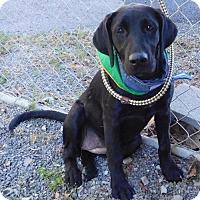 Adopt A Pet :: Lola - Temple, GA