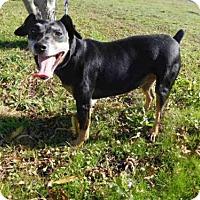 Adopt A Pet :: NYLA - McKinleyville, CA