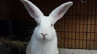 Florida White Mix for adoption in Williston, Florida - Hickory