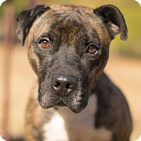 Adopt A Pet :: Sweeney - Adrian, MI
