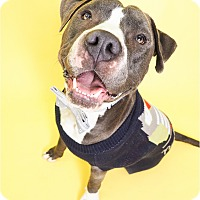 Adopt A Pet :: Theodore - Phoenix, AZ