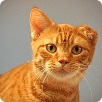 Adopt A Pet :: Carlos - Cincinnati, OH