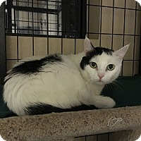 Adopt A Pet :: Quebec - Fountain Hills, AZ