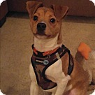 Adopt A Pet :: Chester (COURTESY POST)