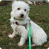 Adopt A Pet :: Curly - New Oxford, PA