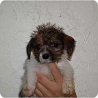 Adopt A Pet :: Petri - Coral Springs, FL