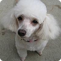 Adopt A Pet :: Sourie - Dover, MA