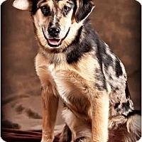 Adopt A Pet :: MaryAnn - Owensboro, KY