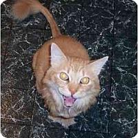 Adopt A Pet :: Tigger - Summerville, SC
