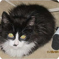 Adopt A Pet :: Tyler - Sterling Hgts, MI