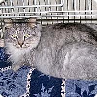 Adopt A Pet :: Sean - Scottsdale, AZ